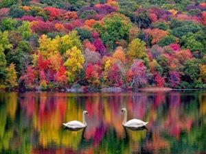 amazing-nature-beauty1