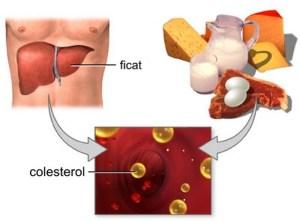 colesterolul-2-Копировать
