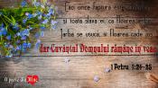 1 Petru 1.24-25