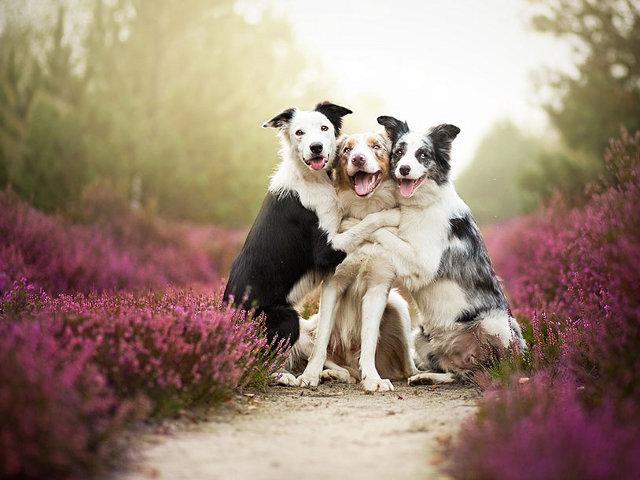 dog-photos1